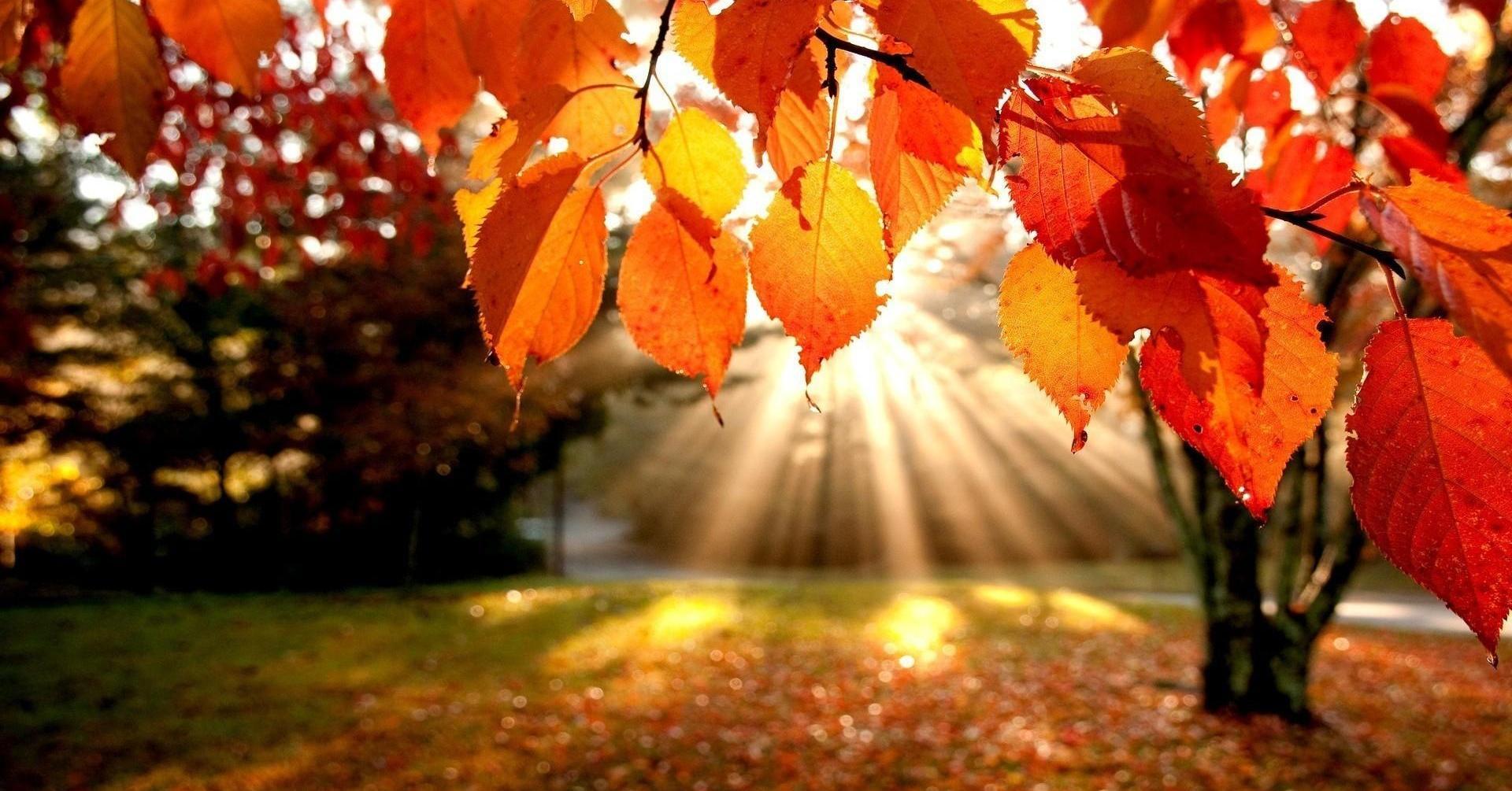 5d6609f4fe_1414443807_14-Redenen-waarom-we-blij-zijn-dat-het-weer-herfst-is__shre